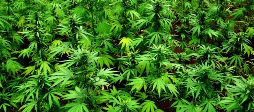 Two different types of Marijuana Possessiaon!